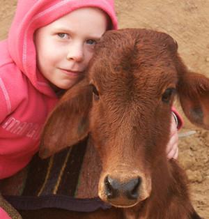 תרבות של הגנה על פרות