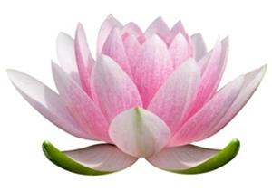 lotus-flower-art